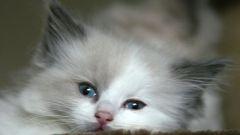 Как прикармливать котят