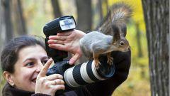 Как красиво оформить свою фотографию