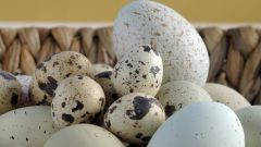 How to drink quail eggs