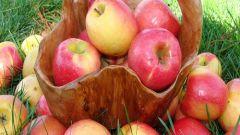 Как собирать яблоки