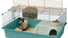 Как обустроить клетку кролика