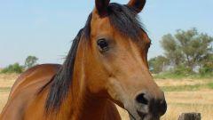 Как играть с лошадьми