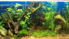 How to defend water for aquarium