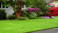 Как сеять газон