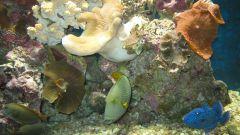 Как чистить грунт в аквариуме
