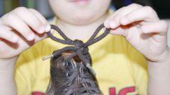 Как научить завязывать шнурки