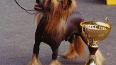 Как оформить родословную для собаки