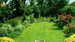Как озеленить участок