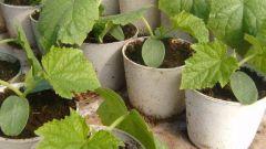 Как пикировать растения