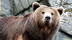 Как напугать медведя