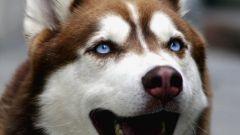 Как хоронить собаку