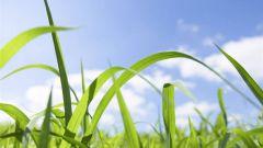 Как улучшить плодородие почвы