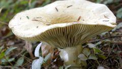 Как засаливать грибы
