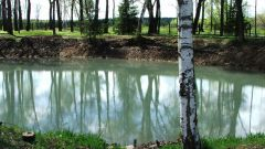 How to build a pond for breeding fish