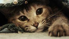 Как избавиться от кошачьего запаха на коврах