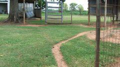 Как построить сарай для кур