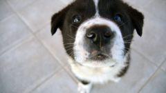 Как назвать щенка