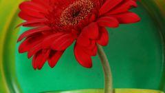 Как оформить горшок для цветка