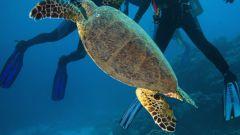 Как купать сухопутную черепаху
