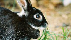 Как назвать декоративного кролика