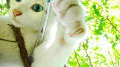 Как подрезать когти у кошки