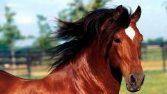 Как тренировать лошадь