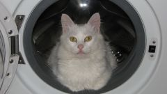 Как избавиться от шерсти кошки