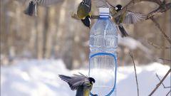 Как смастерить кормушку для птиц