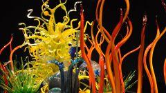 Как сделать красивый аквариум