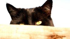 Как сделать ободок с кошачьими ушками