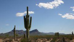 Как нарисовать пустыню