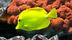 Как наклеить фон аквариума