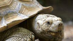 Как разбудить черепаху