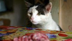 Как отучить котенка лазить на стол