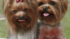 Как попасть на выставку собак