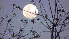 Как определить фазы луны