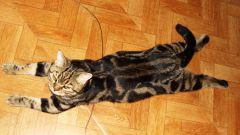 Как лечить цистит у кота