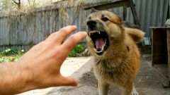 Как спастись от собаки