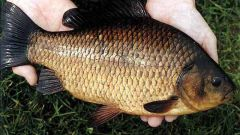 How to catch carp in the summer