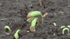 Как повысить плодородие почвы с помощью дождевых червей