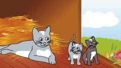Как разводить котят