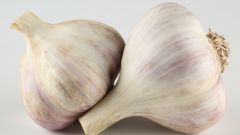 How to preserve garlic until spring
