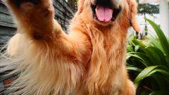 Как научить собаку говорить