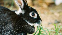 Как отучить кролика кусаться
