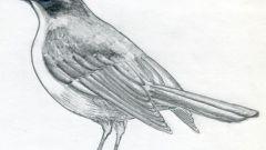 Как рисовать птицу: поэтапный урок