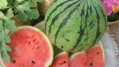 How to grow watermelon