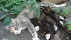 Как выкормить новорожденного котенка