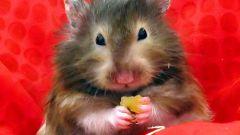 Как назвать мышь