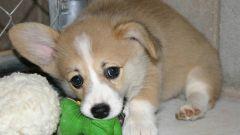 Как выбрать кличку для щенка