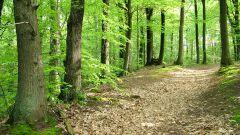 Как описать лес в сочинении